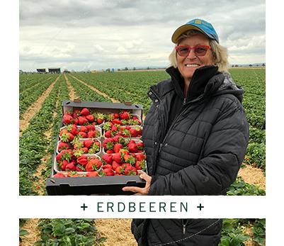 Fresh + Friends - Anbau - Erdbeeren