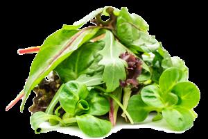 fresh-and-friends-küchenfertige-ware-salatmischung